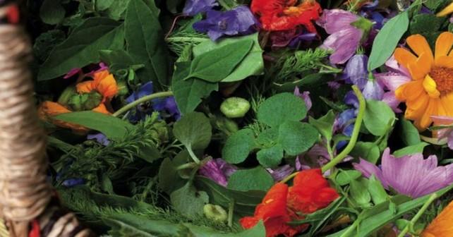 plantes commestibles