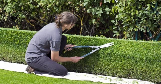 jardin entretien